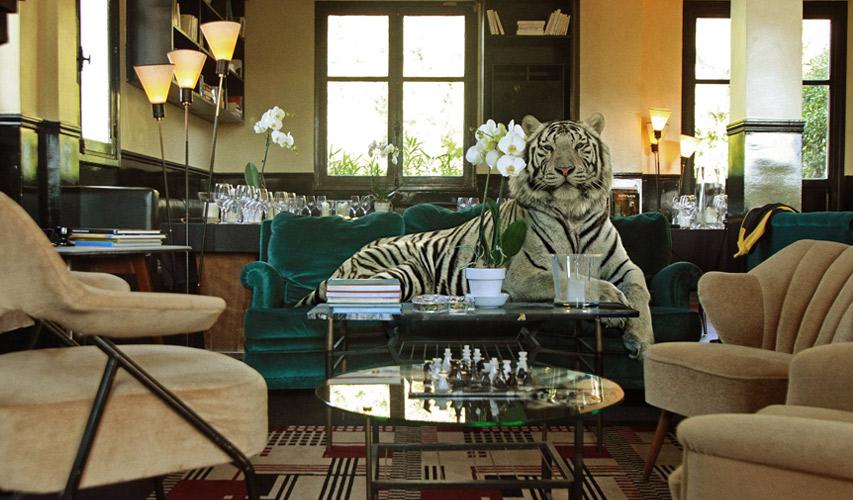 tigrr_salon